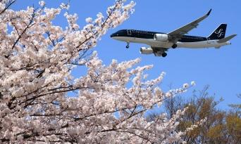 꽉 막힌 하늘길에 핀 벚꽃, 입국제한은 4월 말까지 연장