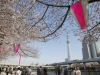 """색다른 봄 기다리는 """"여기는 도쿄"""