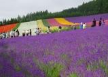 바이올렛의 마법이 홋카이도에 내렸다. '후라노'